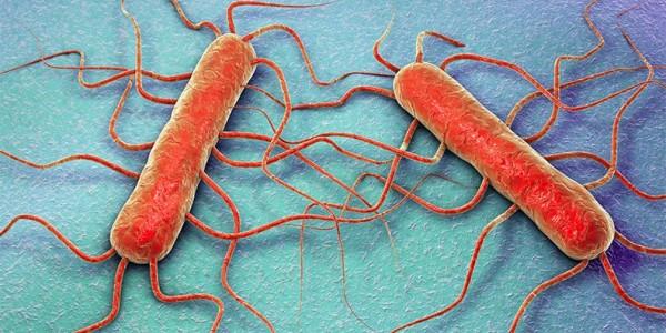 Listeria-monocytogenes_img