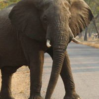 Elephant_Hunter_Indictment_03707