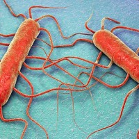 Listeria-monocytogenes_img